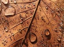 Liścia klonowego tło Fotografia Stock