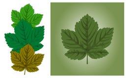 Liścia klonowego tło Zdjęcia Royalty Free
