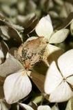 Liścia kościec Obraz Royalty Free