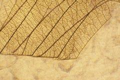 Liścia kolaż Fotografia Royalty Free