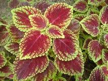 Liścia koloru Wietrzny popołudnie Zdjęcie Stock