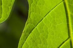 Liścia Nawierzchniowy zbliżenie zdjęcie stock