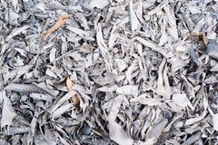 Liścia oparzenie z tekstury pojęciem zdjęcia stock