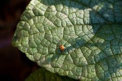 Liścia ostrze zdjęcie stock