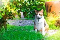 Liścia rozmyty przedpole z ślicznym kotem Asia bawić się w domu na gazonie na drzewnym rozmytym tle używać tapetę lub backgroun zdjęcie stock