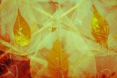 Liścia suchy kościec Obraz Royalty Free