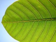 Liścia szczegół fotografia stock