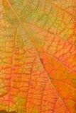 Liścia szczegół 22 Fotografia Stock