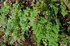 Liścia tła tekstury wzór Zdjęcie Royalty Free