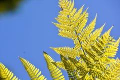 Liścia tła tekstury wzór Zdjęcia Royalty Free