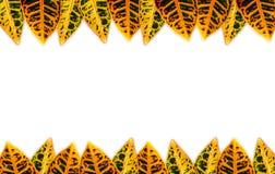 Liścia tło Obrazy Stock