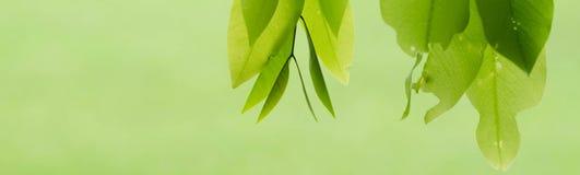 Liścia tło Fotografia Stock