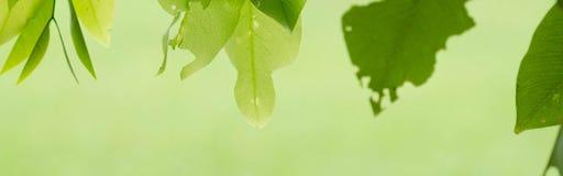 Liścia tło Zdjęcie Stock