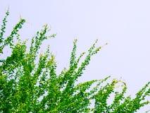 Liścia tło Zdjęcia Stock