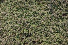 Li?cia wz?r ma?y drzewo z zielon? tekstur? zdjęcie royalty free