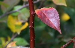 Liścia zakończenie na gałąź Obrazy Royalty Free