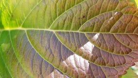 Liścia zbliżenie zdjęcie stock