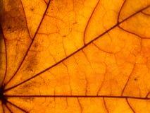 Liścia zbliżenie Zdjęcia Stock