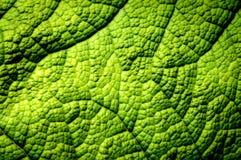 Liścia zbliżenie Zdjęcie Royalty Free