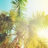 Liście drzewka palmowe w słońca świetle Obrazy Royalty Free