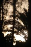 Liście drzewko palmowe przez cienia słońce obrazy stock