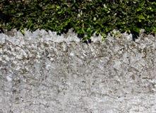 Liście i ściana Fotografia Stock