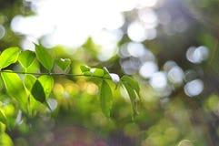 Liście i światło słoneczne Fotografia Stock