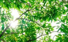 Liście i gałąź Przeglądają naturalnego zielonego tło Obrazy Stock