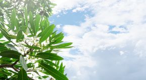 Liście i gałąź Przeglądają naturalnego zielonego tło Zdjęcia Stock