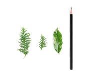 Liście i ołówek Zdjęcia Royalty Free