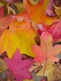 Liście jesień zdjęcia royalty free