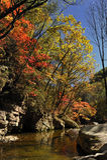 Liście jesień klon Zdjęcia Royalty Free