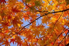 liście jesienią Obrazy Stock