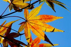 liście jesienią obraz royalty free