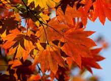 liście jesienią obraz stock