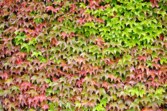 liście jesienią Fotografia Stock