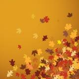 liście jesienią Zdjęcia Royalty Free