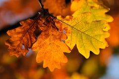 liście jesienią Fotografia Royalty Free