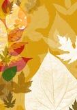 liście jesienią tła Obraz Royalty Free