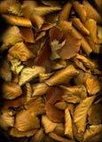 liście jesienią tła obrazy royalty free
