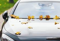 Liście klonowi na nowym luksusowym samochodzie przy jesienią Zdjęcie Royalty Free