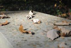 Liście na ławce Zdjęcie Stock
