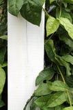 Liście na białym płotowym słupie Fotografia Royalty Free