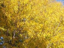 Liście na jesień dniu Obrazy Royalty Free