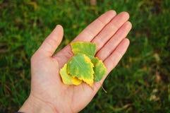 Liście na ludzkiej ręce eco ręce mi Zdjęcia Stock