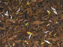 Liście na podłoga w Hatfield lesie, Essex Anglia zdjęcia royalty free