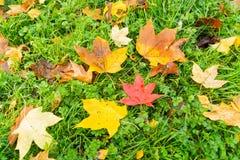 Liście na ziemi przy jesień czasem Obraz Stock