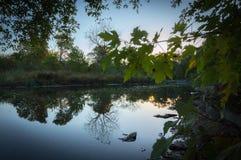 Liście Nad rzeką W spadku obraz stock