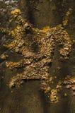 Liście nawadniają zatoczkę Obrazy Royalty Free