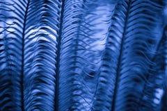 Liście od daktylowego drzewa w błękitnym brzmieniu fotografia stock